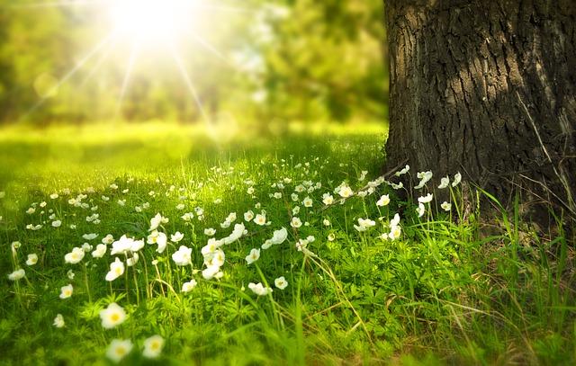 Spring in uk